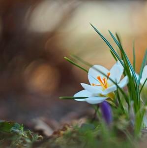 na začiatku jari...