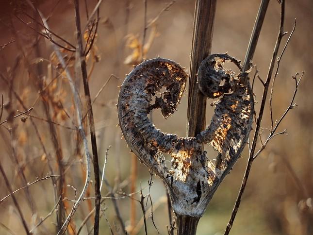 Valentínske z prírody...