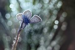 motýlie sny...