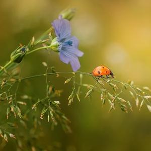 život v tráve...