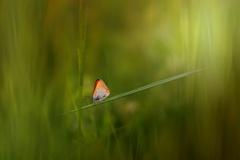 mostík z trávy...