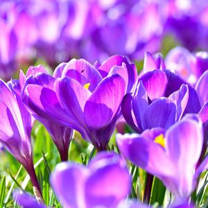 tíško šepká jar