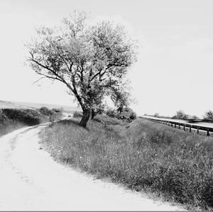 Cesty k domovu