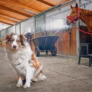 Kôň, pes a hnoj. To je náš život