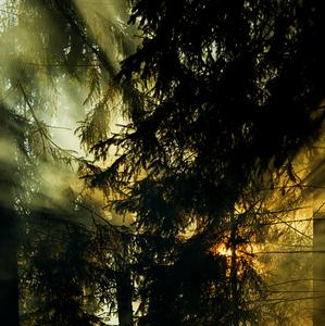 keď horí les a hasiči nikde