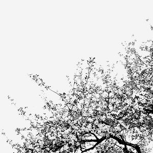 pod jabloňou