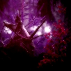 v čarovnom lese