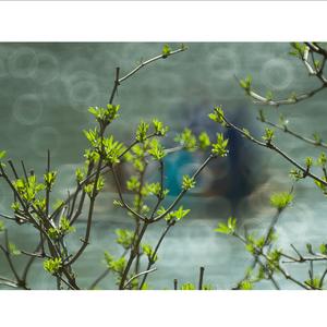 jar na Dunajci