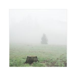 ráno som bol v lese