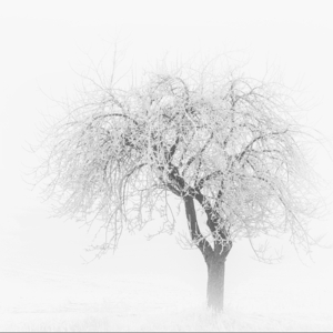 Mlha a mráz