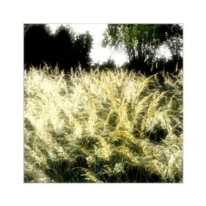 na jeseň, keď rozkvitne tráva