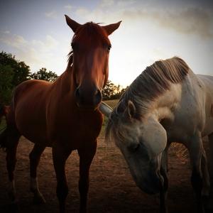 dusot koní uslyšíš