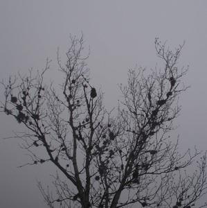 Opustený v hmle a zime