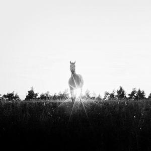 slncový kôň II
