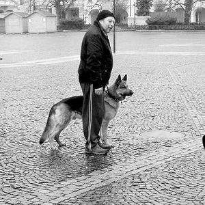 fotograf a pes