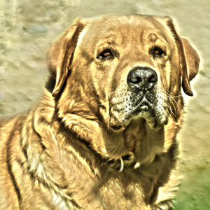 Portrét psa.
