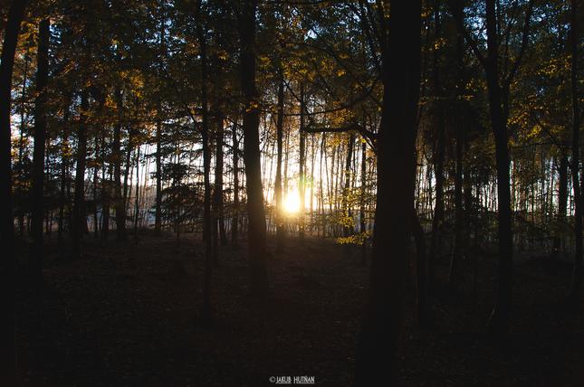 V čarovnom lese.