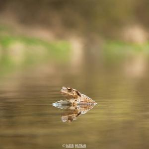 Žabka kuká do neznáma...