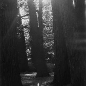 chvílka v lese