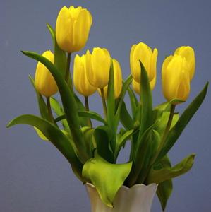 tulipány(i)