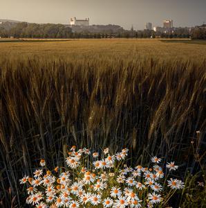 kvety a hrad