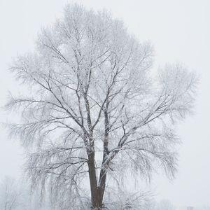 solitér v zime