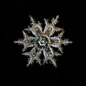 Snehova vlocka