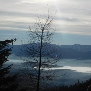 Strom, hory...Liptov