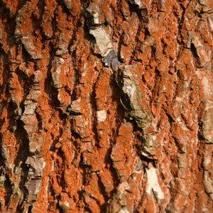 Kôra stromu