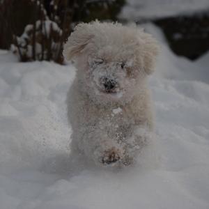 Benny a sneh