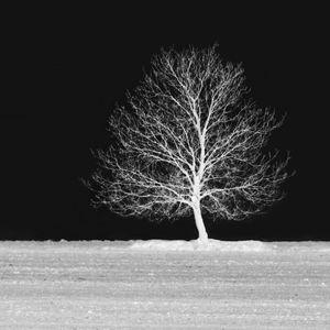 Tarantínov strom