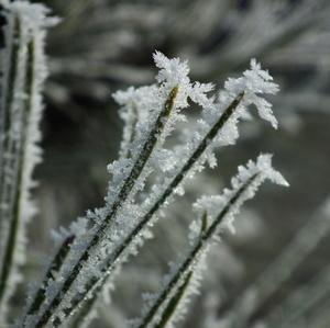 v objatí mrazu