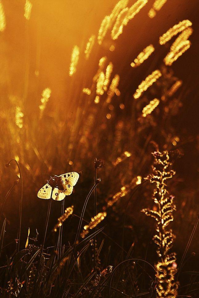ranný dotyk slnka