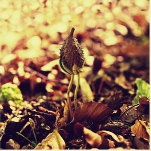 sila prírody