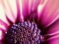 vo vnútri kvetu