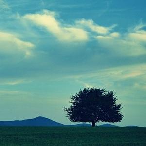 na chotári strom
