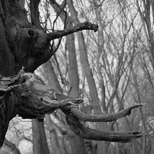 Stromové tvary-netvary