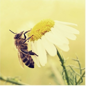 Hmyz...