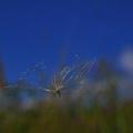 Hojdajuce vo vetre