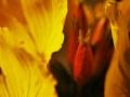 vnútro kvetu