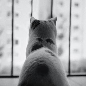 Pozorovateľka