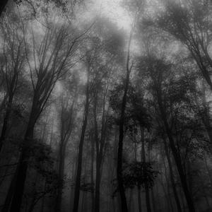 Ciernobiela jesen v hmle