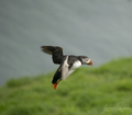 Landing on the Skomer Island