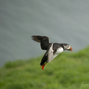 Landing on the Skomer Island