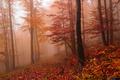 Jesen v Hmle