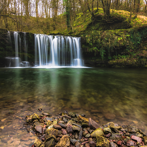 V Lese pri vode