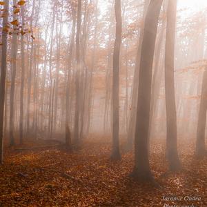 Jesenne ranko