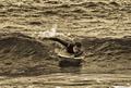 Na vode a boarde