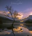 Osamely strom