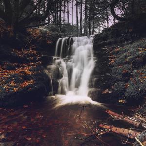 V lese 2